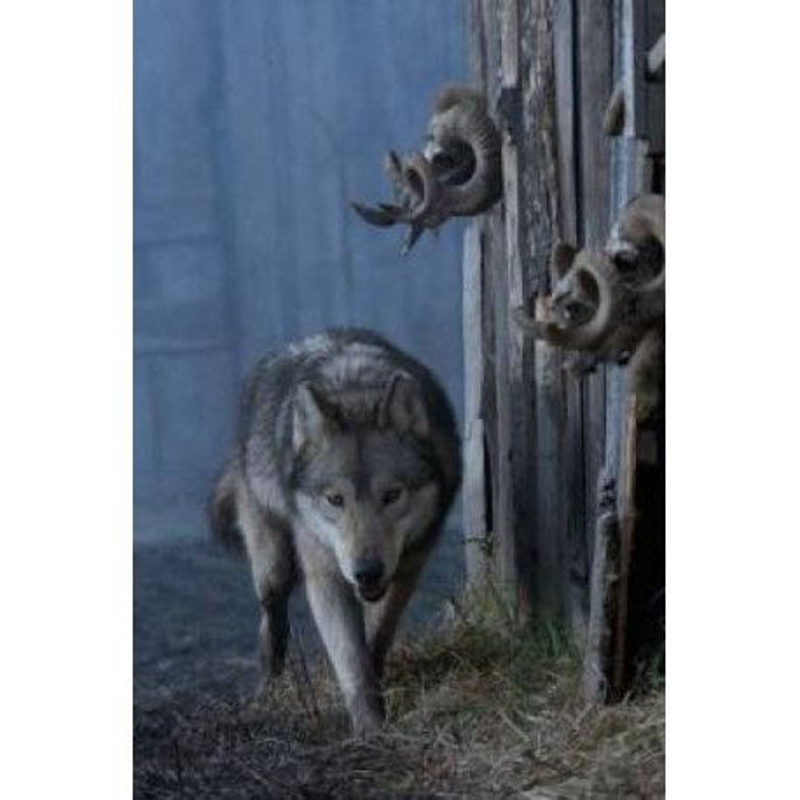 Vivre avec les loups - proj publique